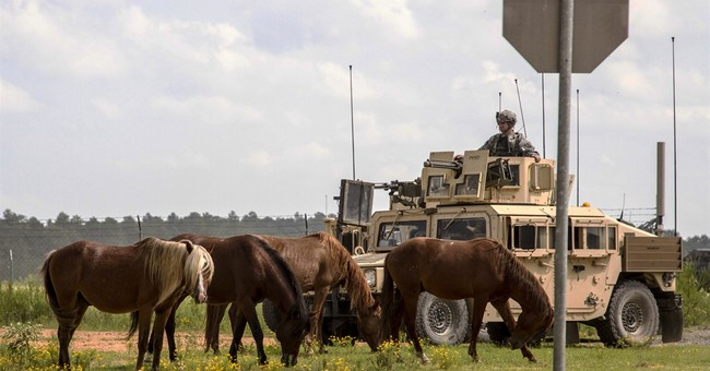 Army says nay to 700 feral horses roaming Louisiana base