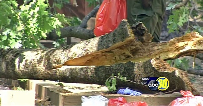 Tree limb falls on tent killing 2 young campers in Yosemite