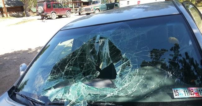 Black bear breaks into car in Montana, destroys interior