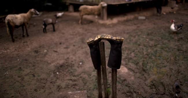 Eradication spells misery for Peru's coca farmers