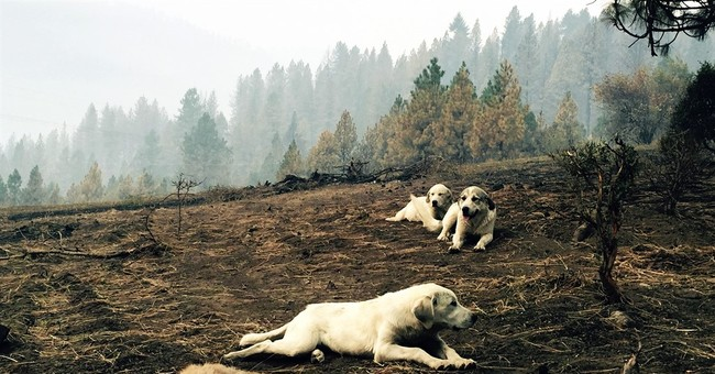Dogs protect fawn body in wildfire-scarred Idaho
