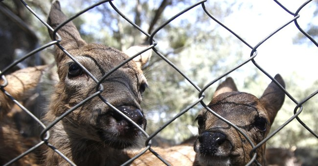California drought may exacerbate wildlife-human encounters