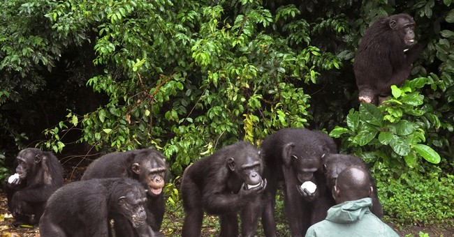 Liberians look for help to care for research chimps