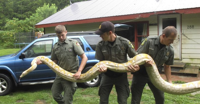 2 homeless pythons given to Vermont man headed to sanctuary