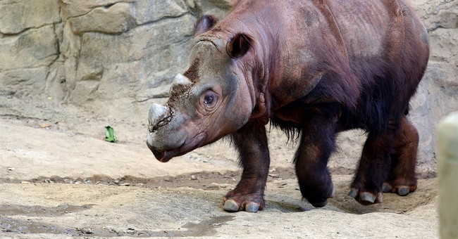 Ohio zoo sending endangered rhino to Indonesia to mate
