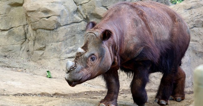 US zoo sending endangered rhino to Indonesia to mate