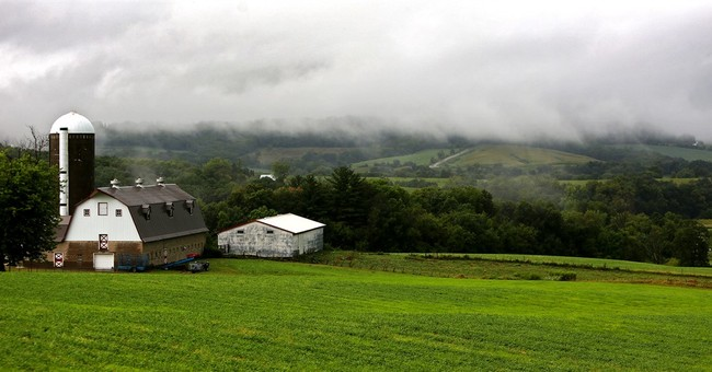 Farm profits to fall second consecutive year