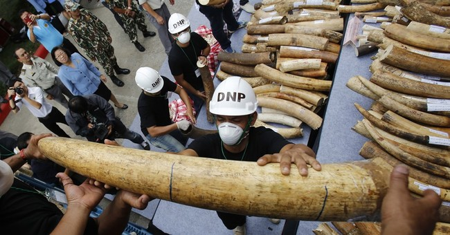 Thailand destroys more than 2 tons of illegal ivory