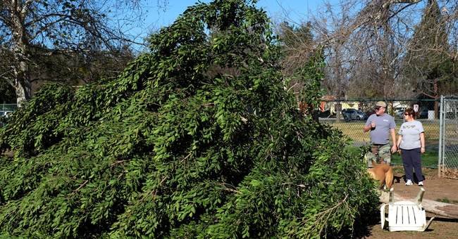 Santa Ana winds knock out power to thousands in California