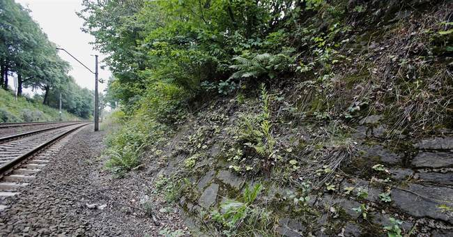 Gold hunters blocked from site of alleged Nazi gold train