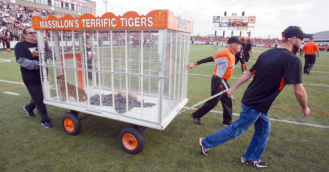 Ohio football team gets live tiger mascot for season opener