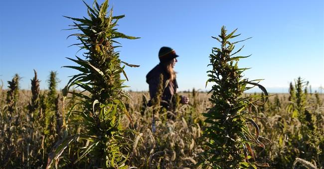 Oregon hemp farmer says startup going slow