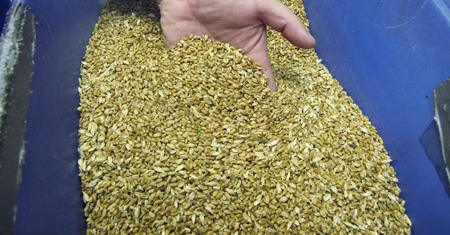 In reversal, abundant grain trains available for harvest