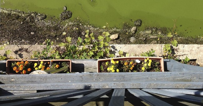 Algae drives down property values on Lake Champlain