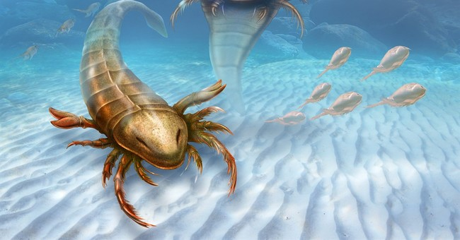 Fossils show big bug ruled the seas 460 million years ago