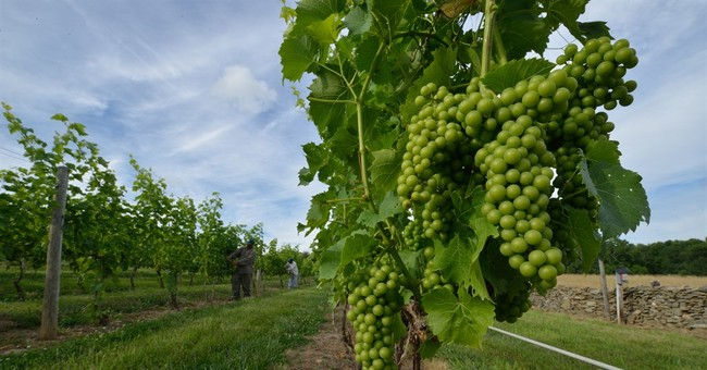 Near DC, Virginia's Middleburg offers wine country getaway