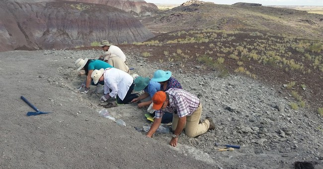 Amateur paleontologist finds rare fossil of fish in Arizona