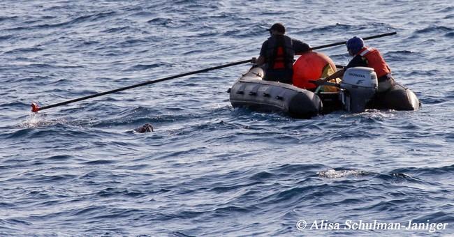 Rescuers seek blue whale tangled up off California coast