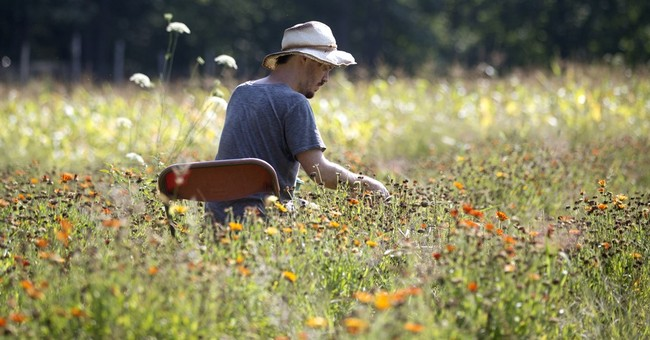 Hudson Valley organic farm produces seeds largely by hand