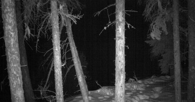 Rare photos of Colorado lynx captured by automated cameras