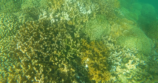 Correction: Coral Bleaching story