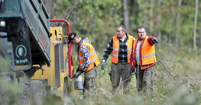 Forest workers clear site of alleged hidden Nazi train