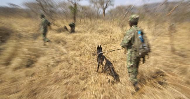 In Rwanda, dogs and handlers train to track poachers