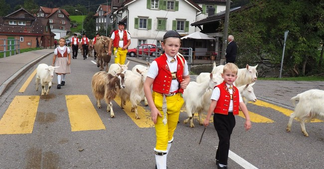 Swiss celebrate return of cows from mountains each fall