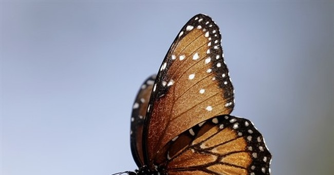 Nature foundation unveils $3.3M in monarch butterfly grants