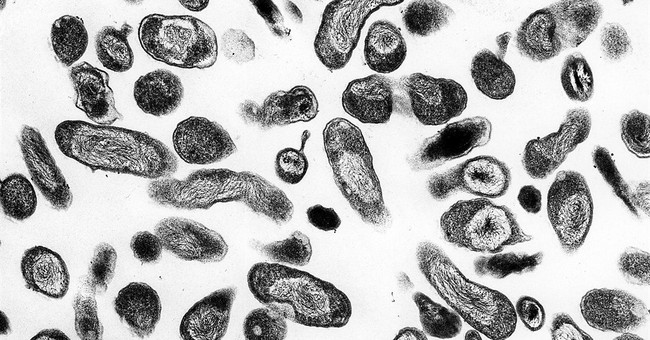 Rare Q fever outbreak reported in American medical tourists