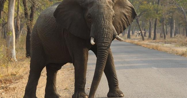 Zimbabwe: 14 elephants killed by cyanide poisoning