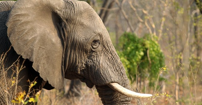 Zimbabwe: 14 elephants killed by cyanide poisoning