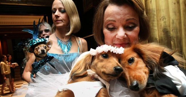 Expect tiny tuxes but no real puppy love at doggy weddings