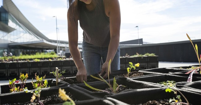 JetBlue plants a seed with farm-to-tray-table concept