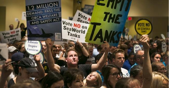 Facing ban on orca breeding, SeaWorld contemplates next move