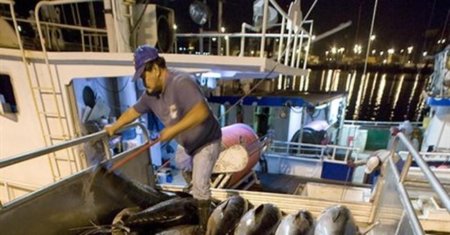 Hawaii longline fishermen allowed to resume catching tuna