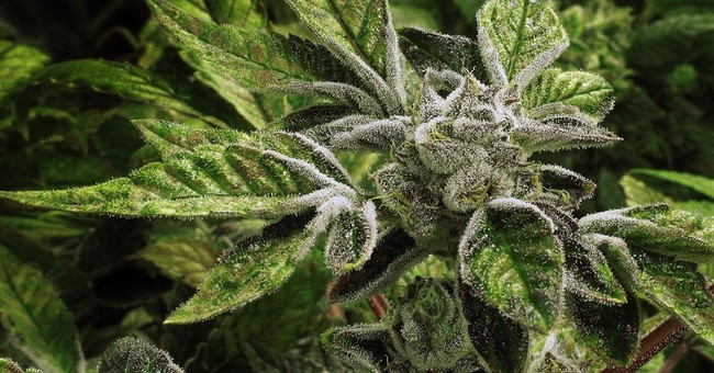 Croatia legalizes use of medical marijuana