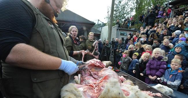 Danish zoo criticized as it dissects lion before crowd