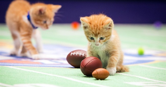 Hallmark Channel's Kitten Bowl teams vie for purring rights