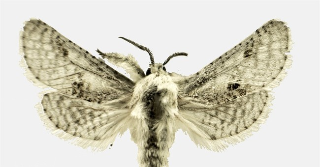 Public has chance to name new moth species