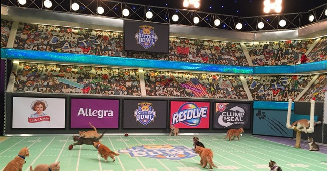 The road to Kitten Bowl III paved with unspeakable cuteness