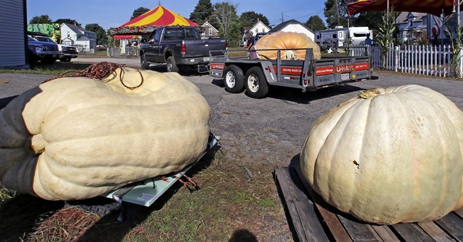 How do you grow a 2,000-pound pumpkin? It's complicated