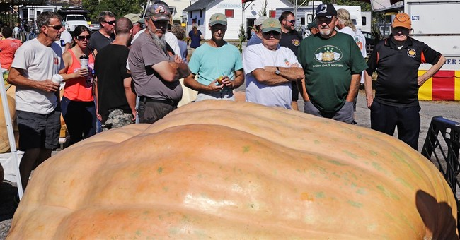Giant pumpkin tips from record-breaking grower Ron Wallace