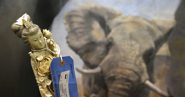 AP PHOTOS: Repository brims with seized wildlife items