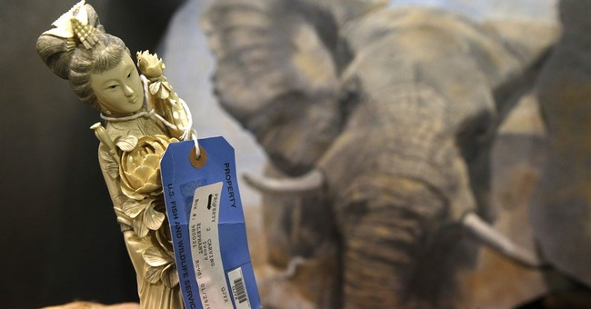 AP PHOTOS: Repository brims with seized wildlife items