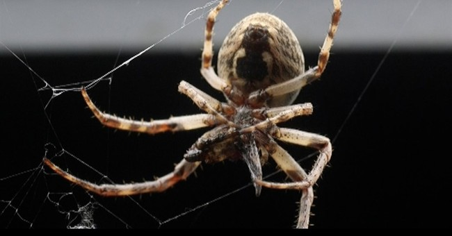 Bridge in Ohio capital is infested with thousands of spiders