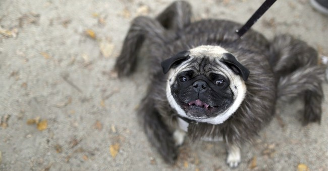 New York park goes to the dogs for 25th Halloween dog parade