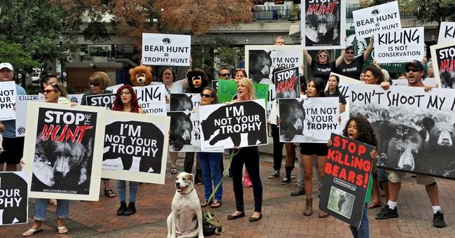 Amid outcry, Fla. says short bear hunt season ran smoothly