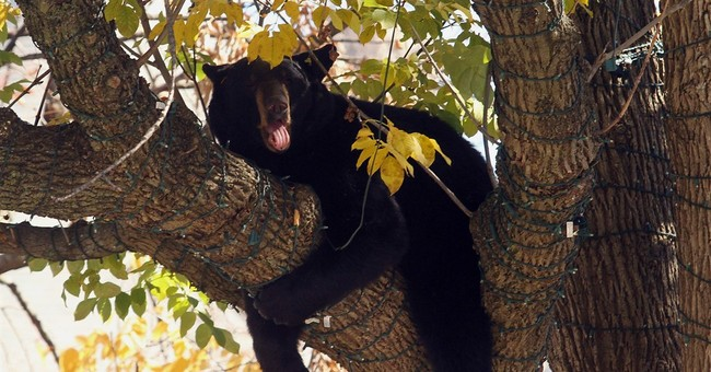 Bear removed from tree after day in New Jersey public park