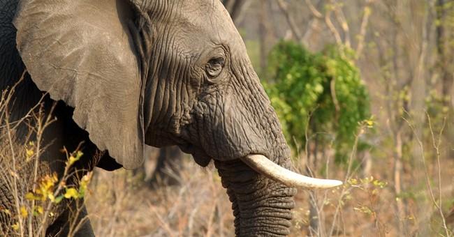 Zimbabwe: 22 more elephants killed in Hwange Park by cyanide